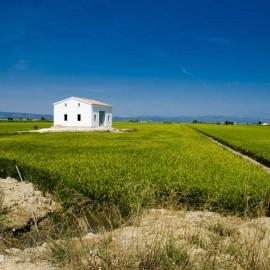 Campos de arroz en el Delta del Ebro
